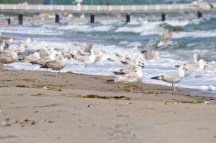 Fotosinne_Am Strand (42 von 61)
