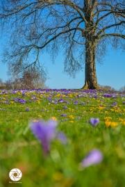 2016_03_26 Frühling_Britzer Garten_Osterwochenende-11