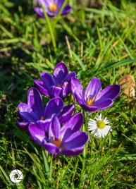 2016_03_26 Frühling_Britzer Garten_Osterwochenende-15