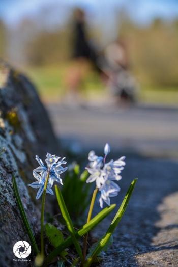 2016_03_26 Frühling_Britzer Garten_Osterwochenende-19
