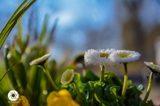 2016_03_26 Frühling_Britzer Garten_Osterwochenende-27
