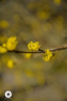 2016_03_26 Frühling_Britzer Garten_Osterwochenende-28