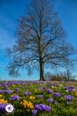 2016_03_26 Frühling_Britzer Garten_Osterwochenende-33