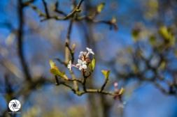 2016_03_26 Frühling_Britzer Garten_Osterwochenende-35