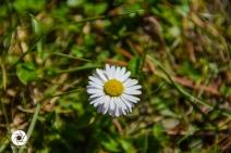 2016_03_26 Frühling_Britzer Garten_Osterwochenende-4