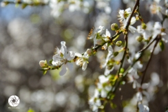 2016_03_26 Frühling_Britzer Garten_Osterwochenende-6