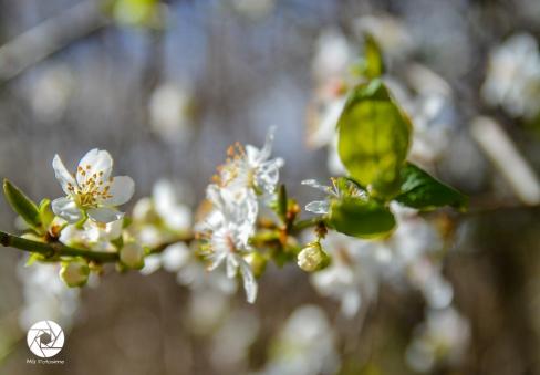 2016_03_26 Frühling_Britzer Garten_Osterwochenende-7