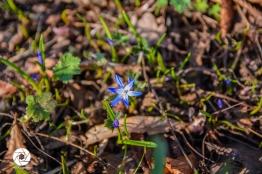 2016_03_26 Frühling_Britzer Garten_Osterwochenende-8