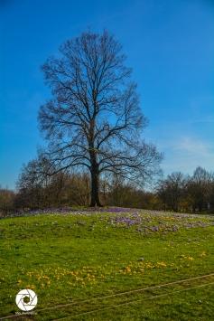 2016_03_26 Frühling_Britzer Garten_Osterwochenende-9